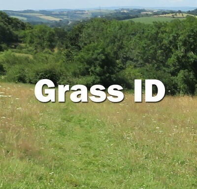 Grass ID (Exeter): Friday 17th July 2020