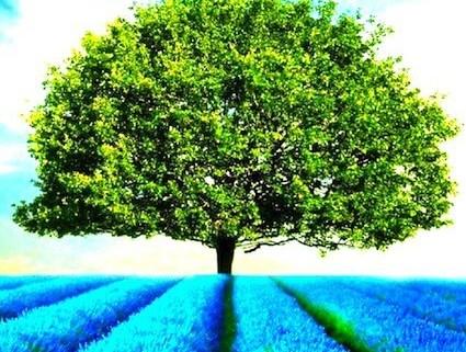 "alt=""Coaching München & Stuttgart: Dr. Berle. Foto Baum im Lavendelfeld, blau-grün"""