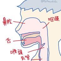 喉頭周囲矢状断