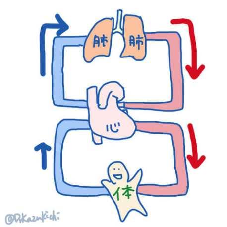 身体の循環