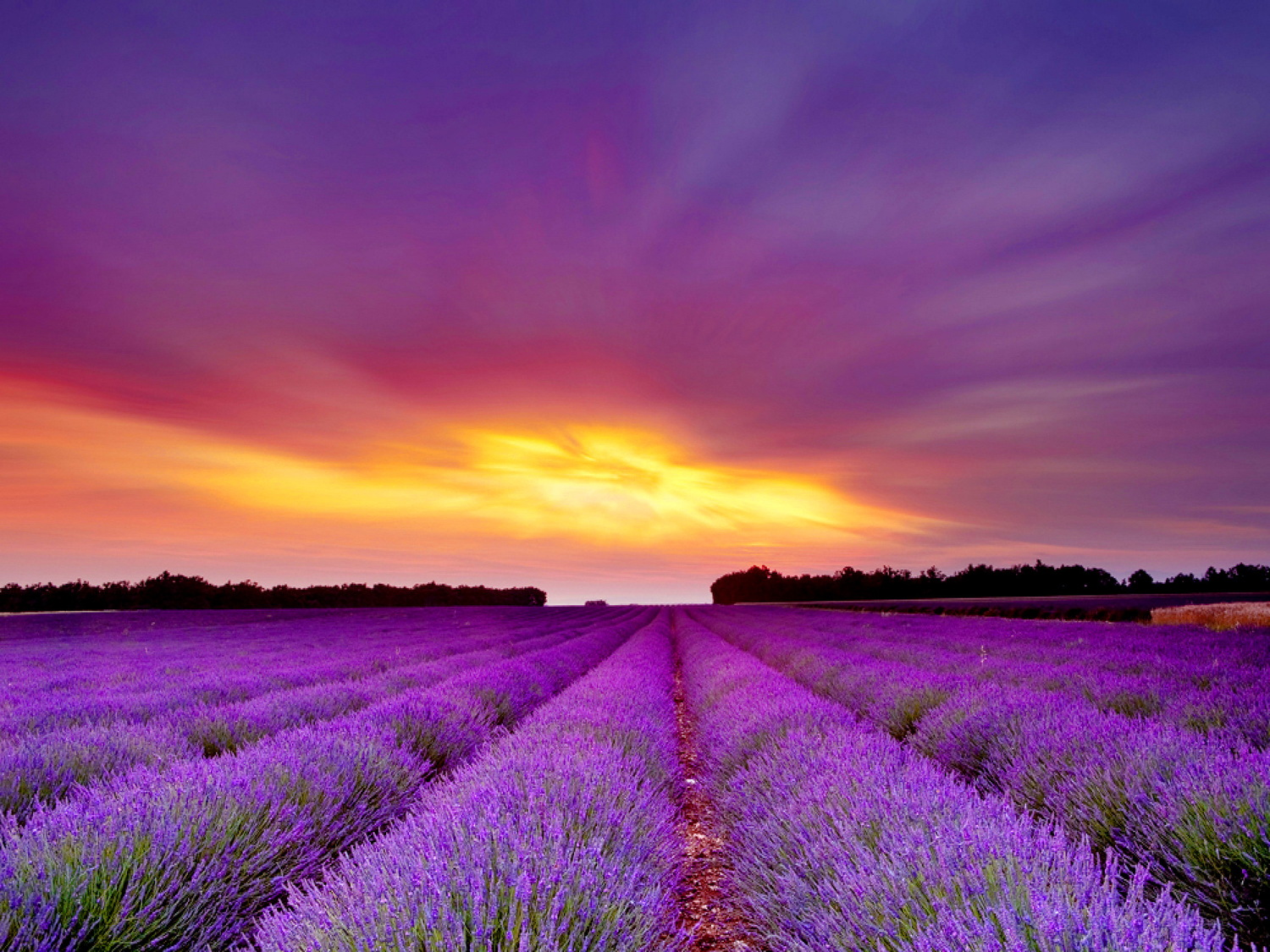 using lavender the universal