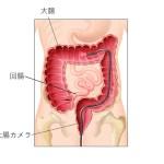 大腸カメラで観察可能な部位
