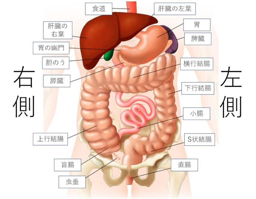 痛み な 妊娠 初期 よう 腹部 下 つる 【医師監修】妊娠超初期~初期、注意したい腹痛・気にしなくていい腹痛|たまひよ