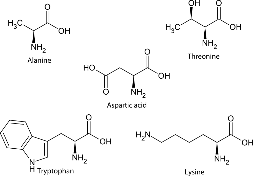 medium resolution of structure of five biologically relevant amino acids