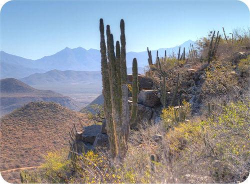 Ecosystems Read Biology CK 12 Foundation
