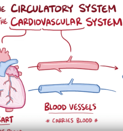 anatomy and physiology of the circulatory system [ 1698 x 876 Pixel ]