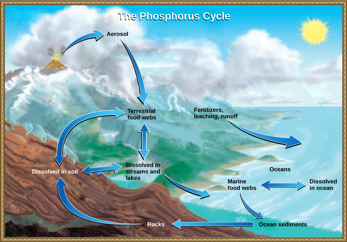 hight resolution of weathering of rocks and volcanic activity releases phosphate into the soil water and air where it becomes available to terrestrial food