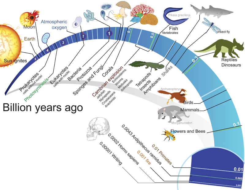 diagram of evolution timeline one wire to i2c life darwin s theory ck 12 foundation on earth