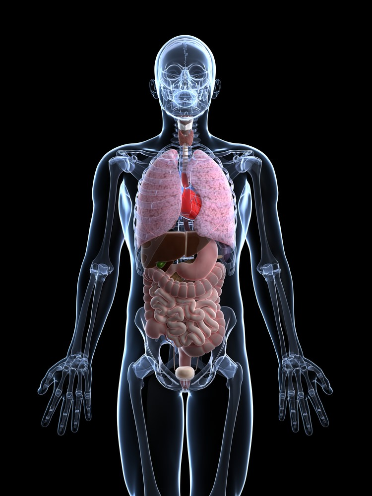 System Interactions in the Human Body - Advanced | CK-12 ...