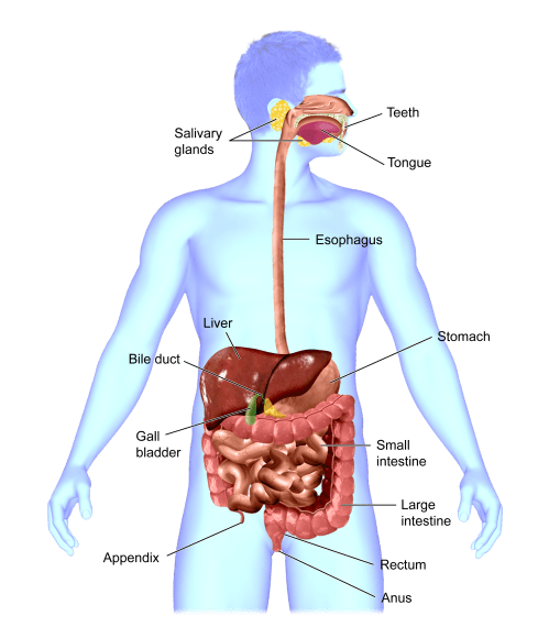 small resolution of map of your digestive tract part i