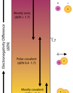 Electronegativity difference and whether the bond is covalent polar or ionic also polarity read chemistry ck foundation rh ck