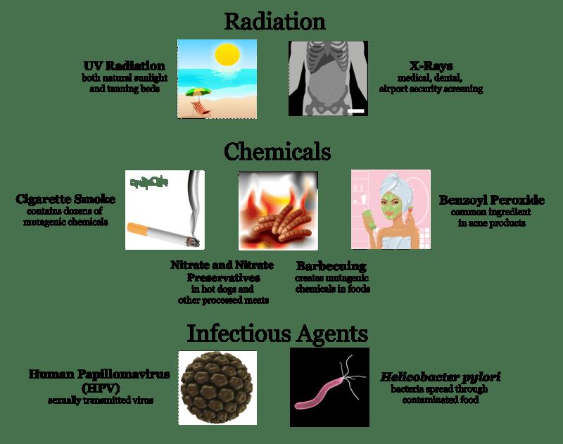 Gene Mutations   CK-12 Foundation