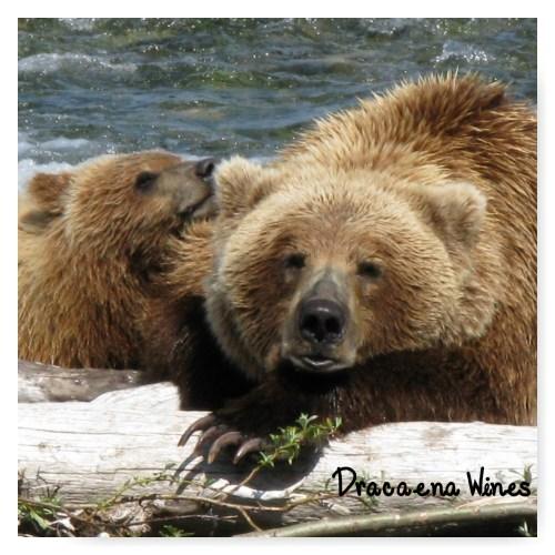 Alaska Bears Dracaena Wines