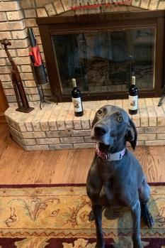 Sadie Blue and Dracaena Wines