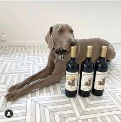 Brunello Bunny owns Erica & Greg Johns in Los Angeles, CA