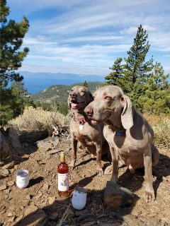 Willow & Ryder own Tessa Bowen in Reno, NV