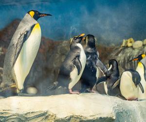 ecosistema-polar-faunia.jpg