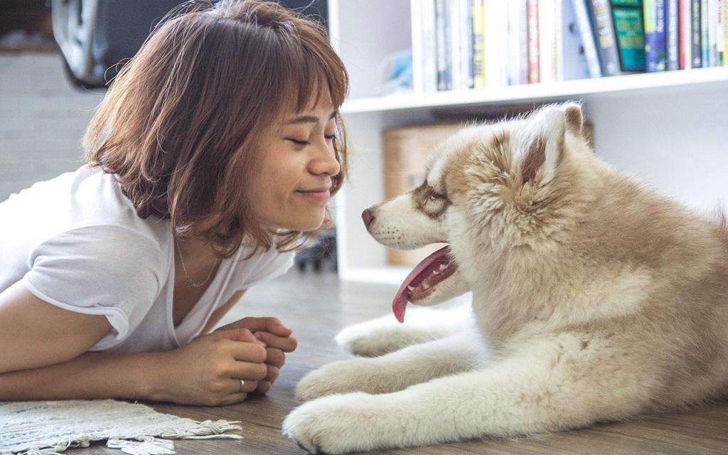 Abre sus puertas el primer café con cachorros en adopción de Madrid.