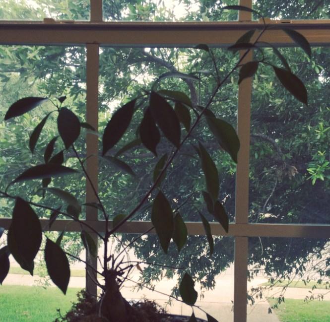 plant-window