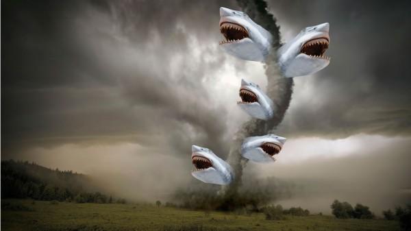 spotting sharks in corn