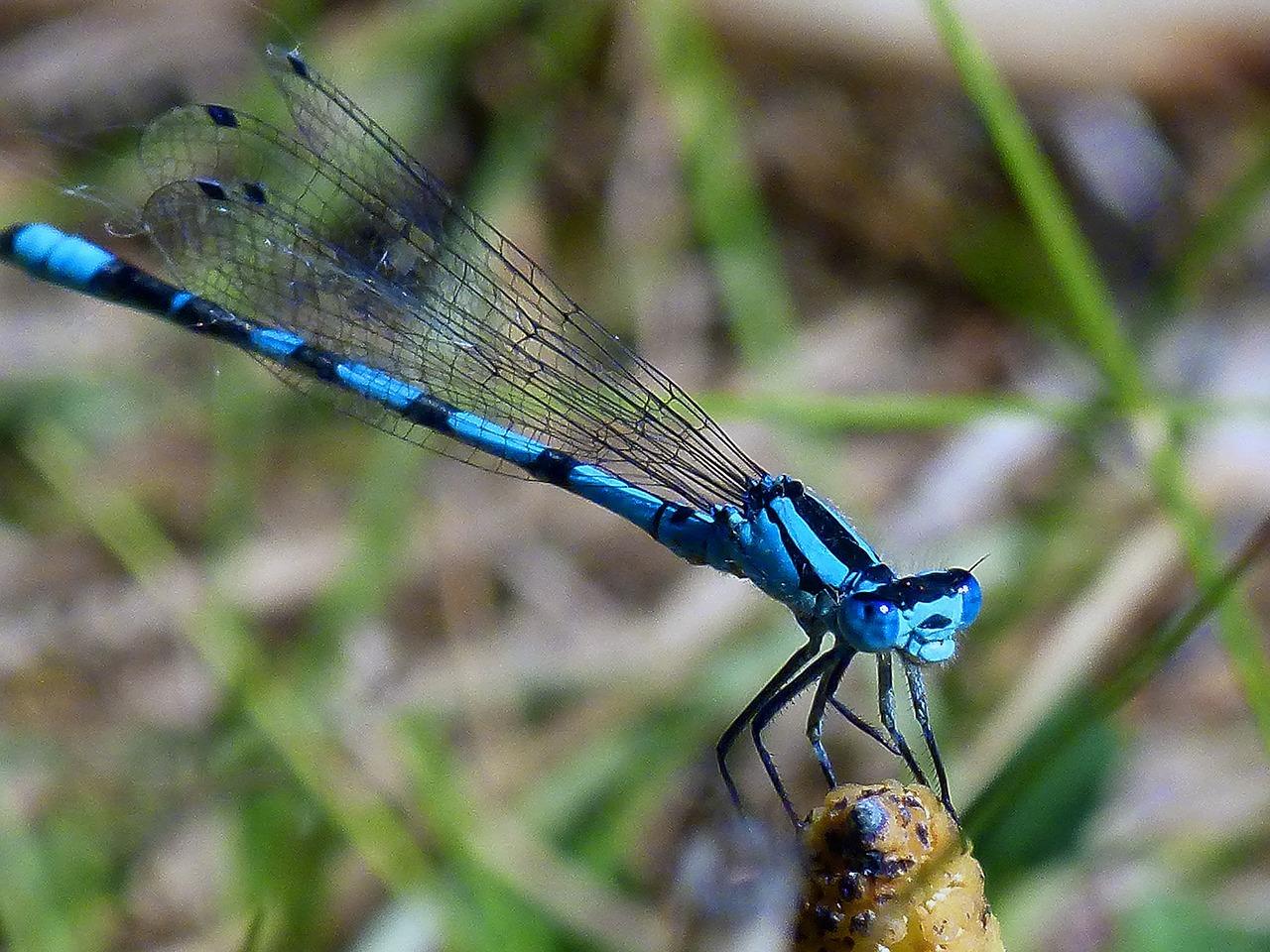 Welcome to dragonflydanele  dragonflydanele