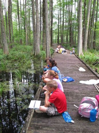 watching dragonflies in the swamp