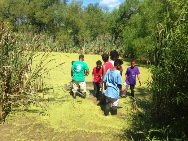 Looking for macro-invertebrates in the pond