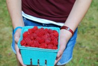 raspberries in hands