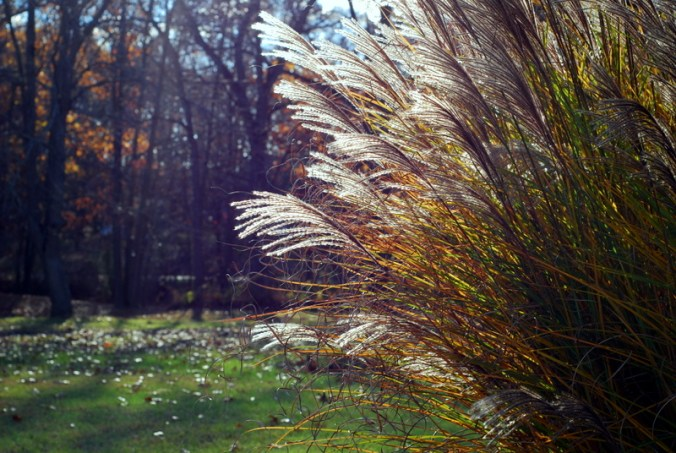 fall grasses in the sun