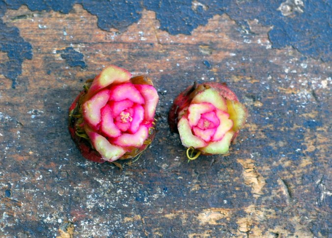 beet roses 4
