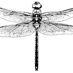 Dragonflies Eye Diagram Viper Remote Starter Wiring Friday 5 Scary Myths About The Dragonfly Woman Graphic