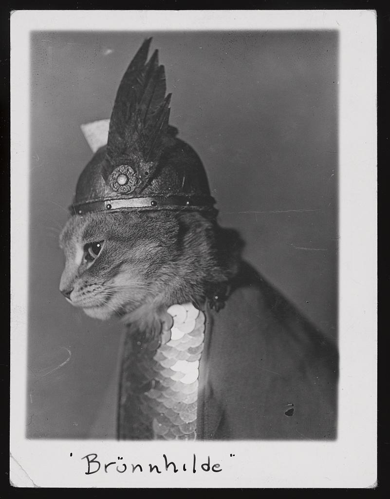 Katze mit Helm!