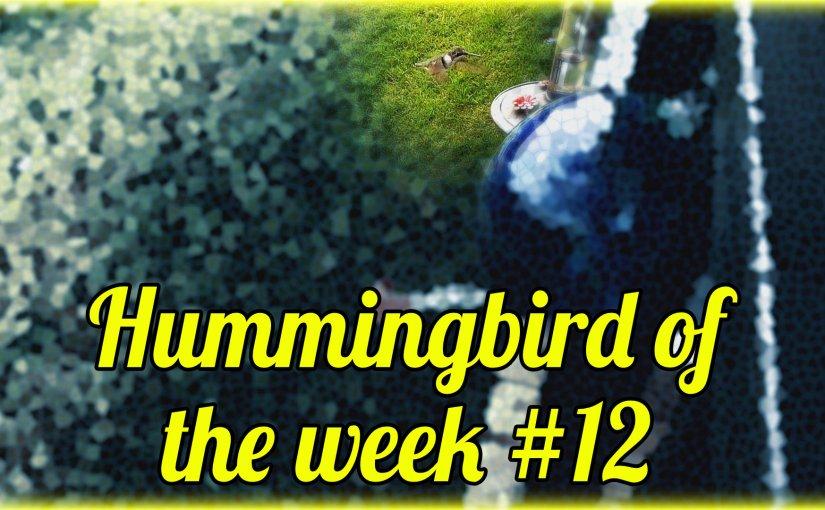 Hummingbird of the week #12