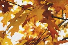 leaves-1005462_1920