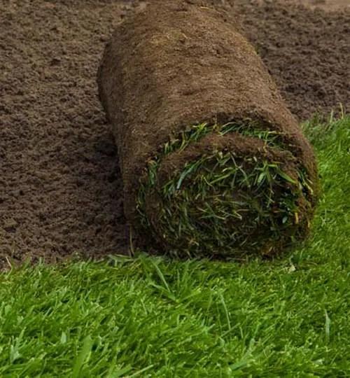 buy lawn turf sod depot