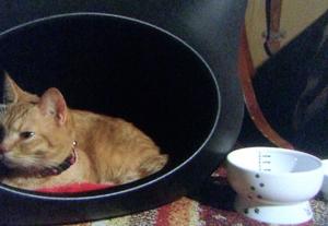 猫ボウルも可愛かった♪