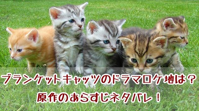 ブランケットキャッツ ドラマ ロケ地 原作 あらすじ