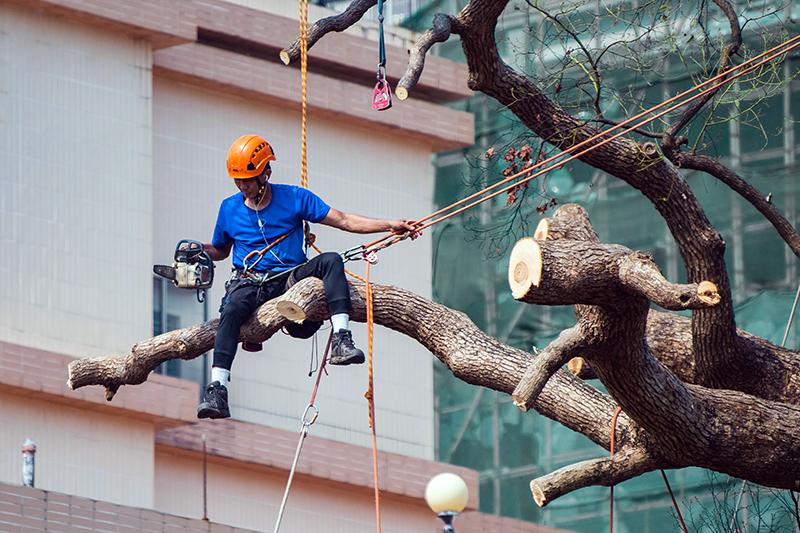 tree cutter