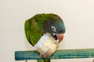 Read more about the article Busy brains and busy beaks