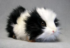 Guinea Pig (pretend), just like you.