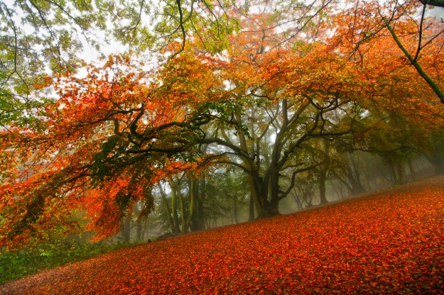 The Health Benefits of Trees - This gorgeous tree could help your heart to stay healthy.