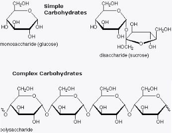 Nutrition 101 - simple vs. Complex carbs.  You can see that complex carbs are just a chain of simple carbs.  They can be split into simple sugars quickly and easily and have the same effect on blood sugars.