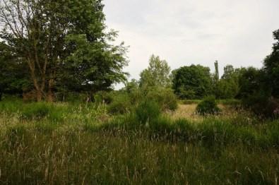 Wahner Heide, Köln // Cologne