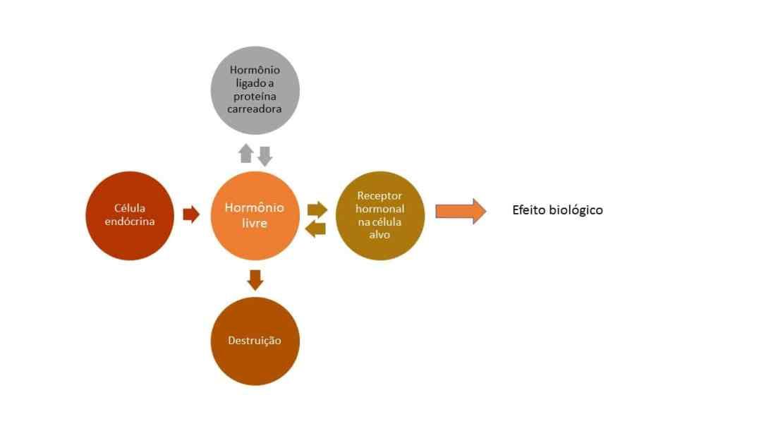 proteinas-ligadoras