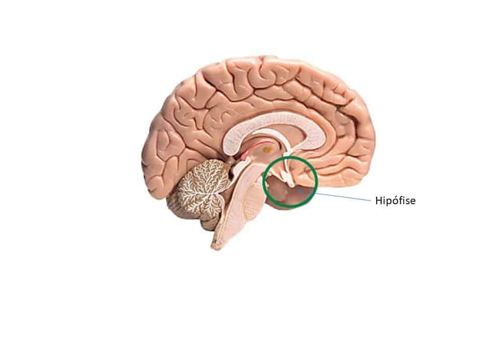 Prolactina, dopamina e impulsividade: conexões