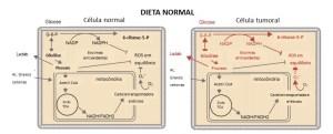 Dieta cetogênica e câncer - mecanismo lesivo para células tumorais
