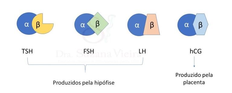 Ilustração com os hormônios glicoproteicos