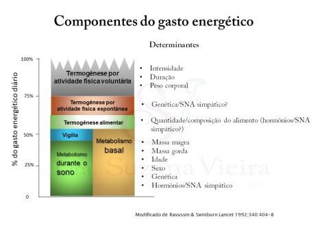O gasto metabólico basal corresponde a 50 a 70% do componente energético diário; o efeito termogênico do alimento corresponde a 10% e a atividade física de 20 a 40%