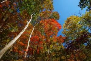 単焦点レンズの特性から考える紅葉の登山レンズ計画