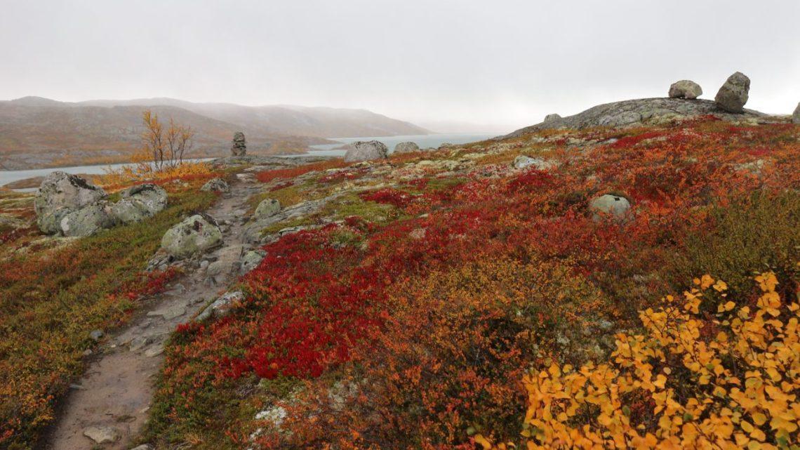 Hardangervidda West im Herbst: Vom Schnee in den Farbenrausch und wieder zurück